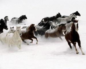 galloping-horse-wallpaper