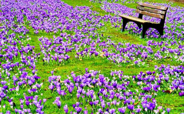 Dream-Spring-2012-Field-Of-Flowers-86
