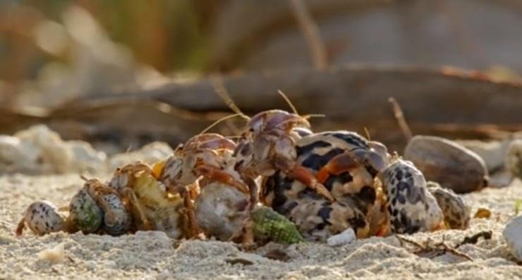 hermit crabs exchange properties