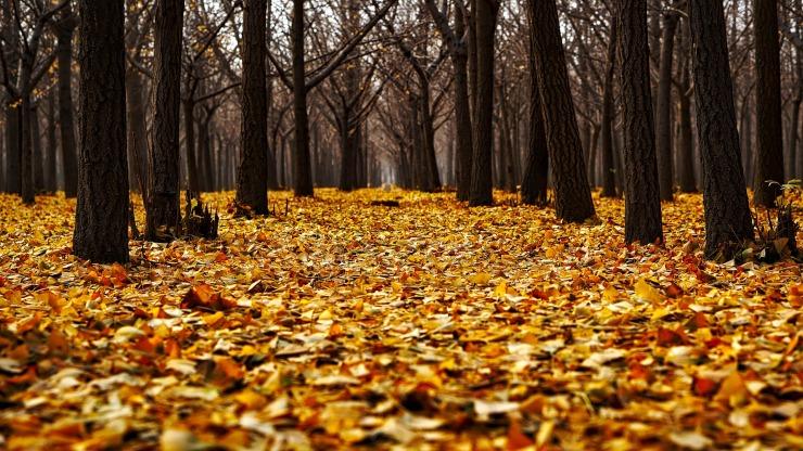 autumn-1804484_1920