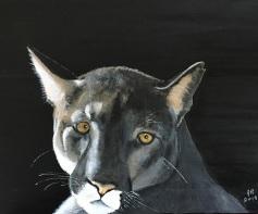 Shy Cougar