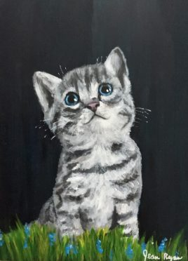 Curious Kitten